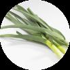 ニンニクの葉のイメージ